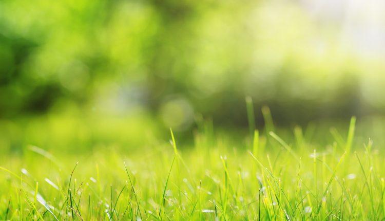 Is stikstof in de tuin goed of slecht?